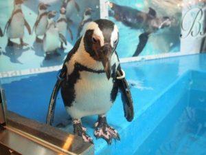 東京で唯一ペンギンとお酒が飲める「ペンギンのいるBAR 池袋店」