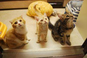 猫好きの聖地ねこぶくろは東急ハンズ池袋店8F 猫の入口が目印!