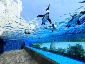 ペンギン達の生態が楽しめる「サンシャイン水族館」は、池袋で是非行くべきスポット