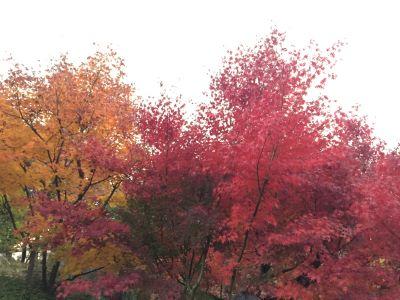 画像:目白公園の紅葉
