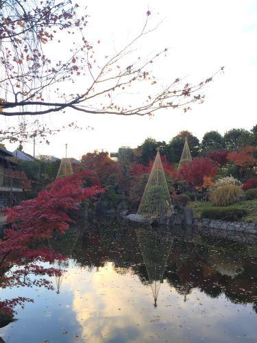 画像:目白公園の池