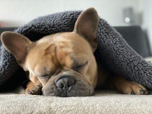 出張先で寝れないアナタに安眠のコツを徹底伝授